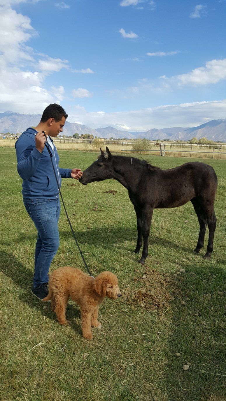 Teddy has had a couple days playing at my aunt's farm in Payson, getting to know her dogs, cows, horses, and chickens.